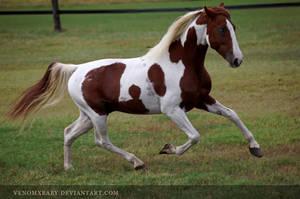 chestnut tobiano stallion 2 by venomxbaby