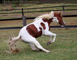 chestnut tobiano stallion 4 by venomxbaby