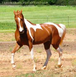 chestnut saddlebred 2 by venomxbaby