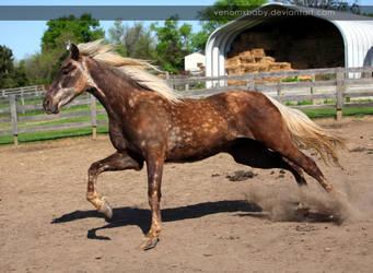 rusty silver dapple colt 1 by venomxbaby