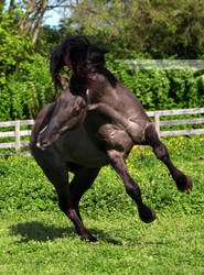 grullo stallion 6 by venomxbaby