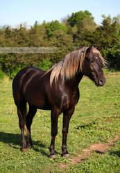 silver dapple stallion standing by venomxbaby