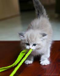kitten tug-of-war by venomxbaby