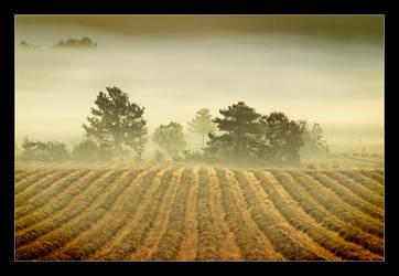 Au pied du Mont Ventoux by mimomon