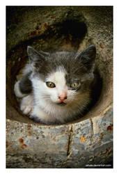 Curious Cat by Ashale