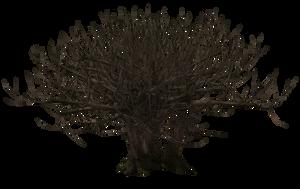 Tree 01 by Free-Stock-By-Wayne