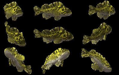 Fish Set 07 by Free-Stock-By-Wayne