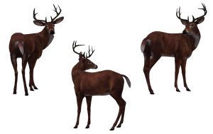 Deer - Buck 07 by Free-Stock-By-Wayne