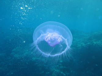 Jellyfish by scifilicious
