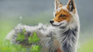 Study - fox by Tyfflie