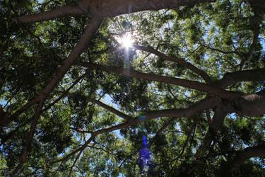 Through the Trees by darthblueash