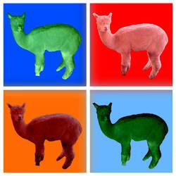 Llama Warhol by Tet-Corporation