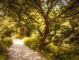 Path by trees STOCK by needanewname