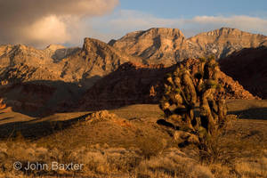 Joshua Tree And Turtlehead Peak by JBaxterPhotography