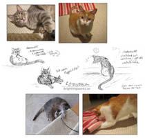 Petsitting Sketches + Snapshots: B-W and Horo by brightling