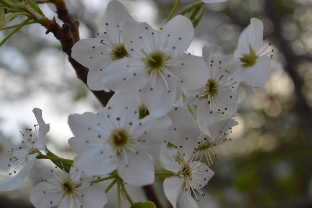 tree flowers by indietrash02