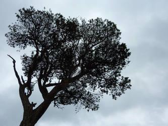 Lone Pine by regansart