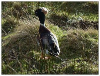 Ducky by regansart