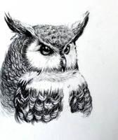 Owl by iicastleii