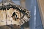Bird house by braelia