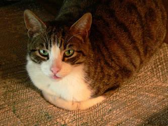 The Cat by plasmadis
