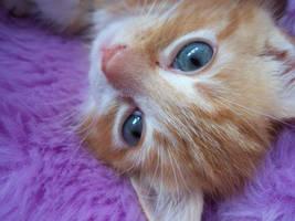Tilly - Stare.. by xXxWhIsPeRxXx