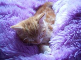 Tilly - Sleepy Time by xXxWhIsPeRxXx