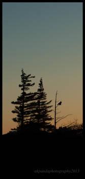 Sunset Silhouettes by akpanda