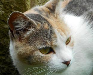 cats eye veiw by Heimyu