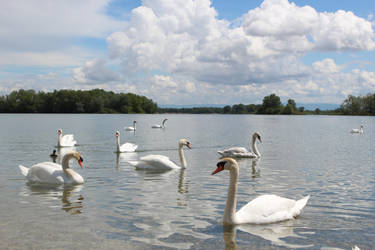 Swan Lake by sakR9
