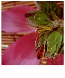 bugs by constantia