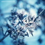 winter. by luckydesigns