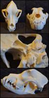 Pit bull Skull by Lupen202