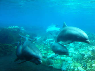 Under SeaWorld 2 by dolphinandcow
