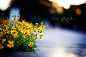 Sundown light by Katrin-Elizabeth