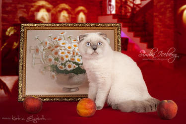 Cat and interior by Katrin-Elizabeth