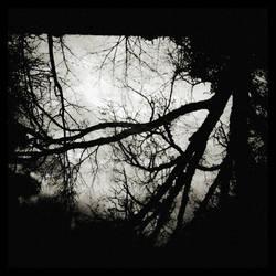 Naturaflection by iambinarymind