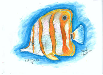 Copper-banded Butterfly fish by joydokeFNaF