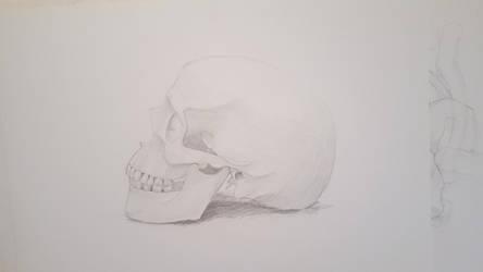 Skull study by PixelP