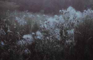 meadows by laura-makabresku