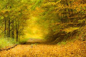 Forest road by mugurelm