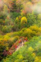 Fall colors by mugurelm