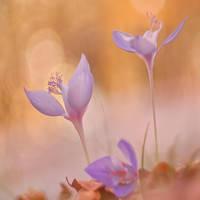 Autumn wild flower 15 by mugurelm