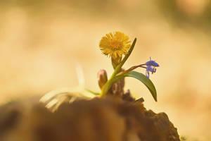 Spring wild flower 48 by mugurelm