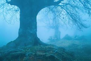 Fog 18 by mugurelm