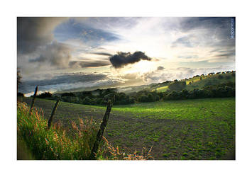 cartago land fields by naturalselection