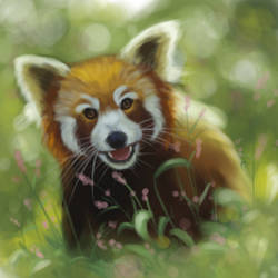 Red Panda - Speed Paint by Miirkat