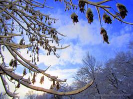 Winter Sky 1 by Aivaseda