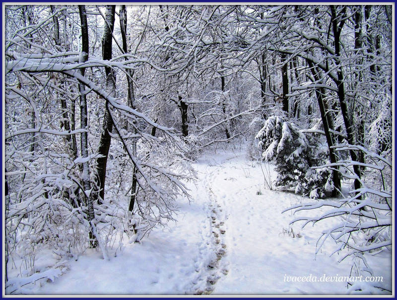 Winter In The Forest 1 by Aivaseda