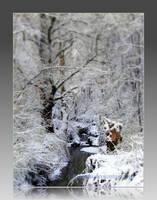 The Creek 2 by Aivaseda